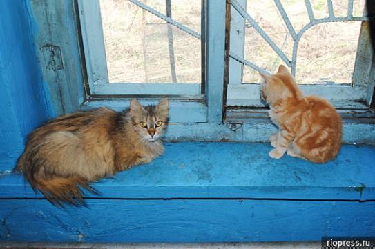 Открыт приют для бездомных животных